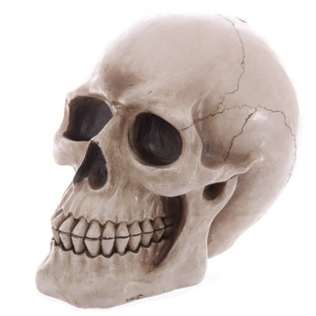 Tirelire réaliste crâne - Grandeur nature
